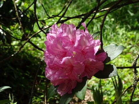 Bosloe Gardens