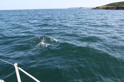 Swimming off?